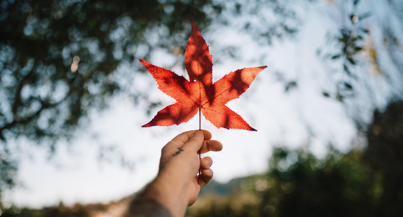 Rapport sur les tendances de consommateurs 2020 de Dentsu Canada