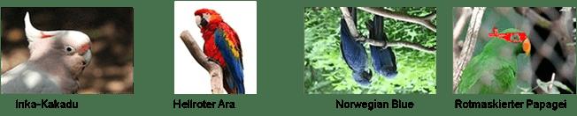 Parrot-Score