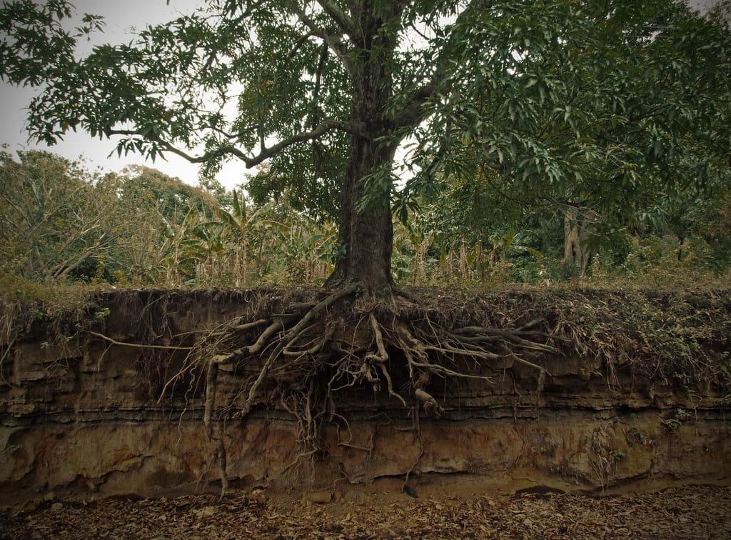 keyword roots