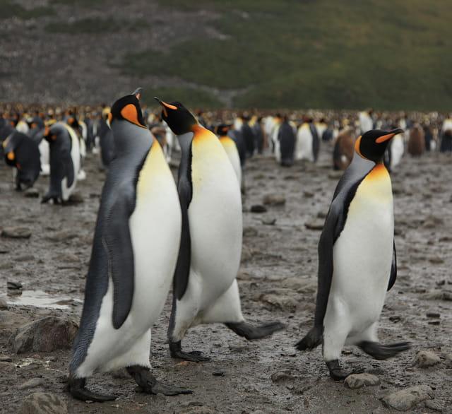 Google Penguin 2.0 gelanceerd